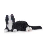 terapikatt svartvit robot katt Mentex