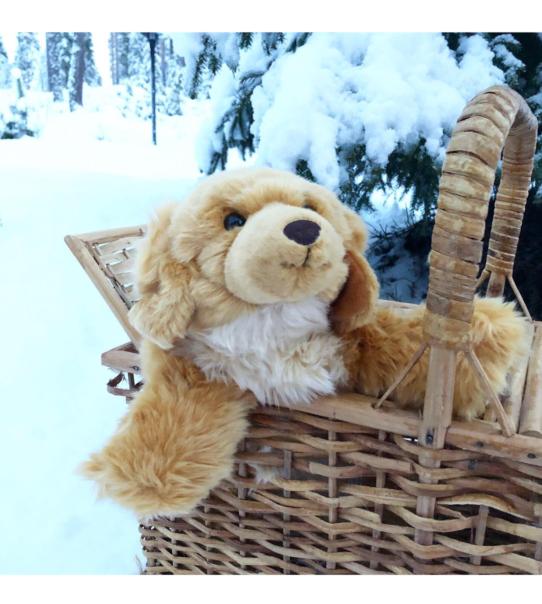 Terapihund terapidocka värmehund demensdocka Lennart 2
