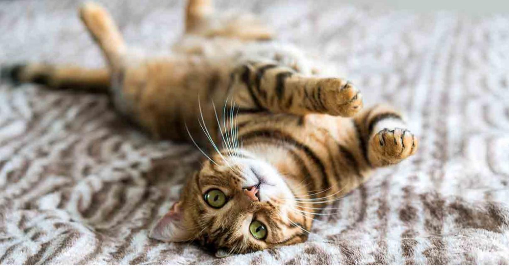 Katt quiz frågesport mentex granngarden