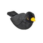 Koltrast fågel med läte mjukdjur 1