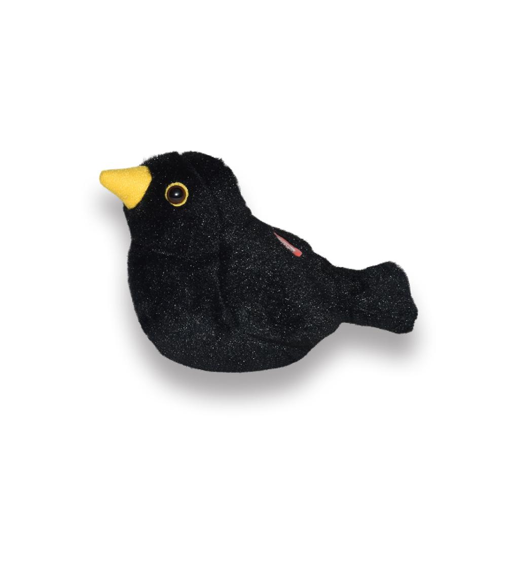 Koltrast fågel med läte mjukdjur 2