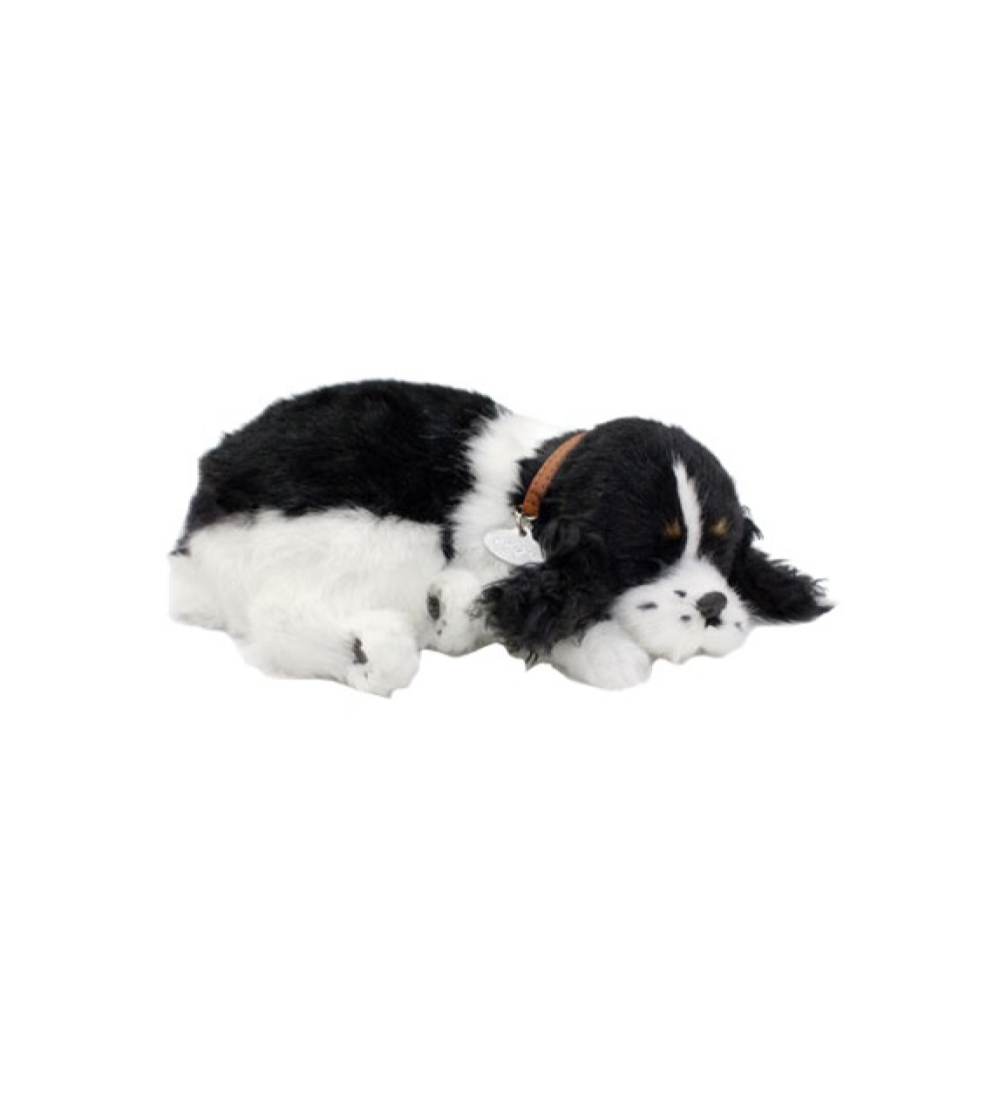 Digital terapihund sovande Cocker Spaniel 2